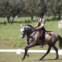 Equitação de Trabalho: Conheça um pouco desta modalidade