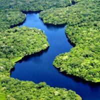 Mundo está mais verde hoje do que há 30 anos, diz estudo