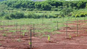 Secretaria do Meio Ambiente retoma atividades de compromisso de recuperação ambiental