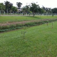 Secretaria do Meio Ambiente cede mudas para plantio de árvores nativas