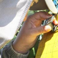 Monitoramento do Fundecitrus mostra população preocupante do inseto transmissor do greening